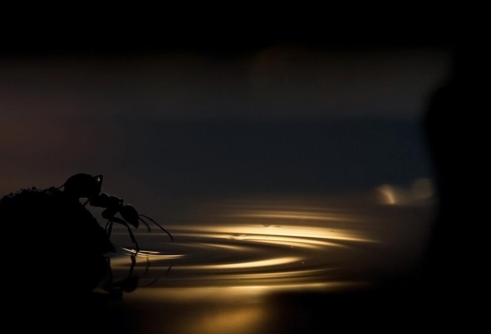 mozgovoy Снимки дикой природы с конкурса Золотая Черепаха