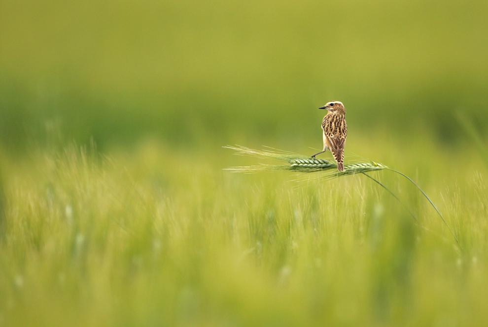 pichirillo Снимки дикой природы с конкурса Золотая Черепаха