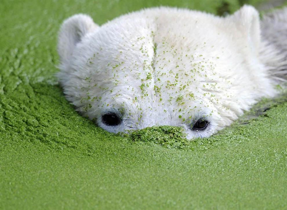 Лучшие фотографии животных по версии MSNBC за 2009.