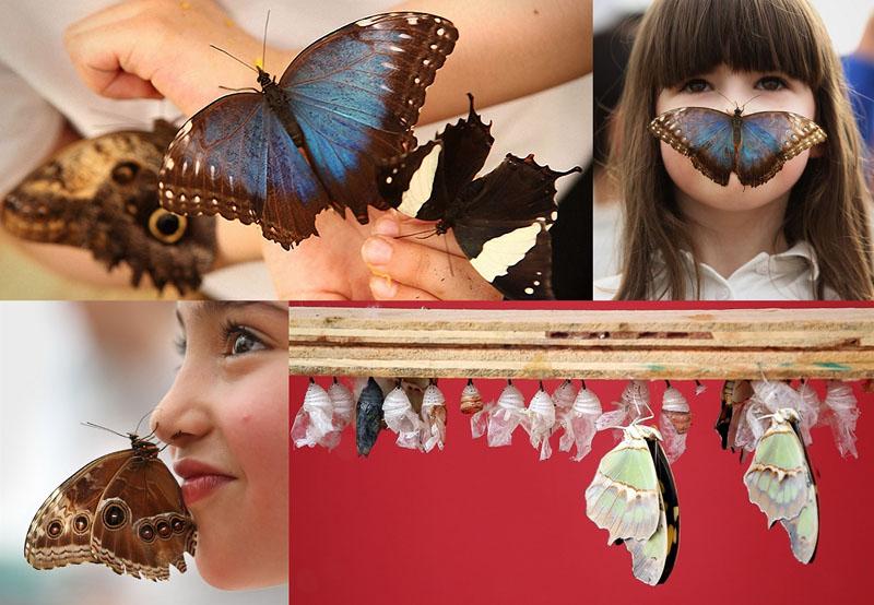 0003 Выставка бабочек в Лондоне