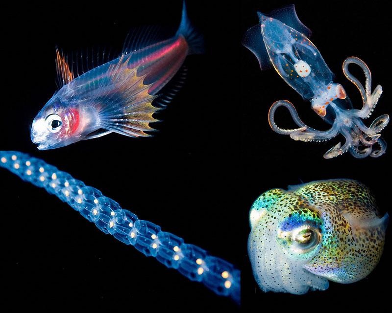 0008 Светящиеся существа из морских глубин