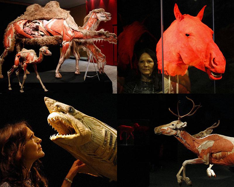0034 Выставка пластифицированных животных в зоопарке Кёльна