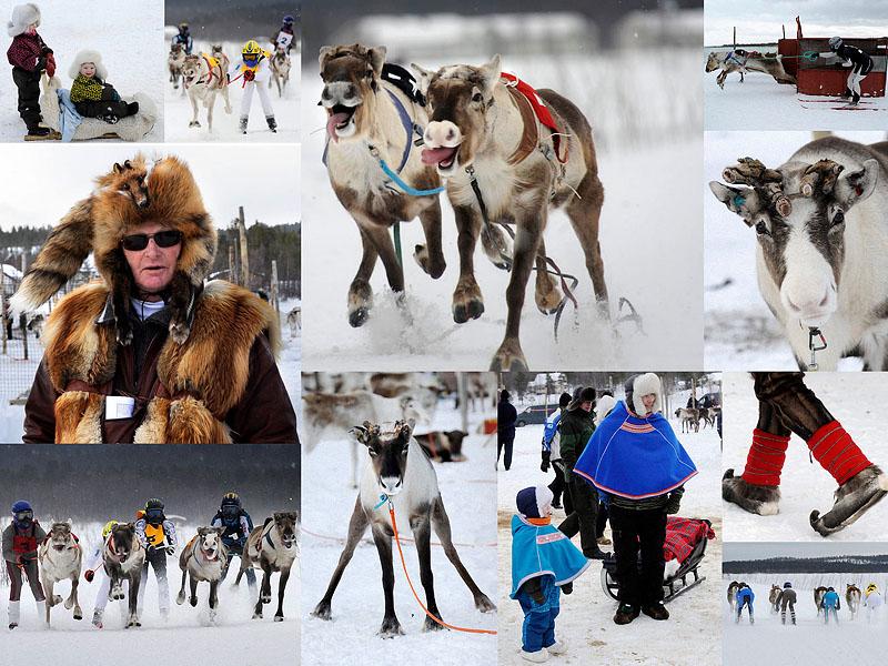 0060  Гонки на северных оленях в Лапландии