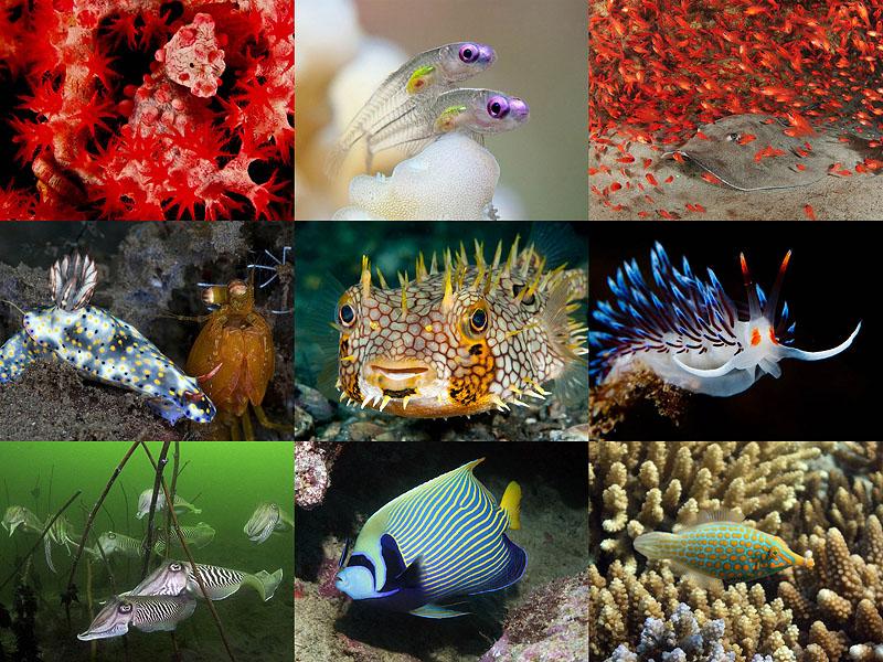 Лучшие подводные фотографии 2011года