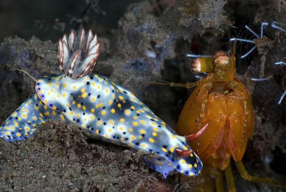 0433 Лучшие подводные фотографии 2011 года