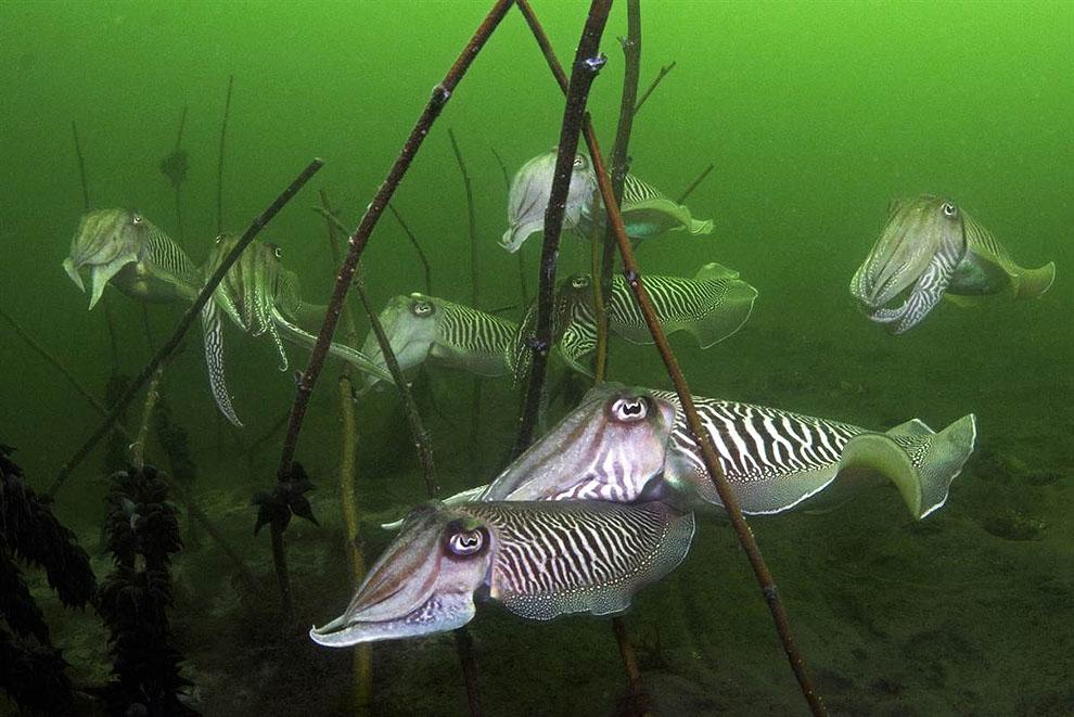0533 Лучшие подводные фотографии 2011 года