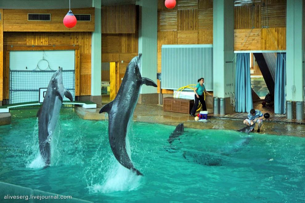 Знакомство с дельфинами в Парке развлечений Сяркянниеми