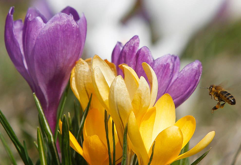 Сила красоты цветов