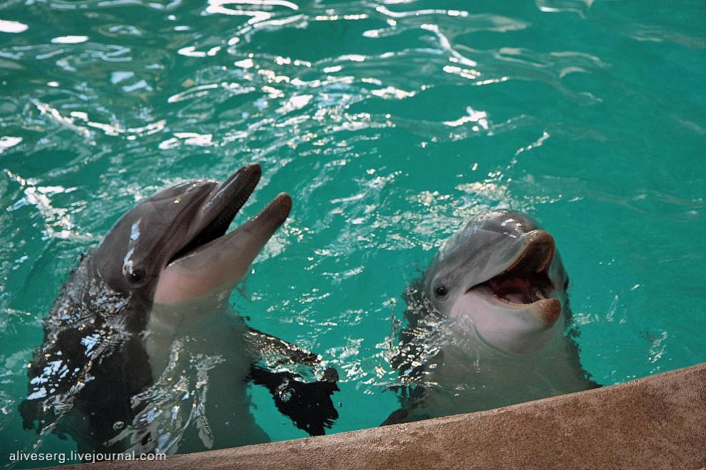 сочинение знакомство с дельфинами