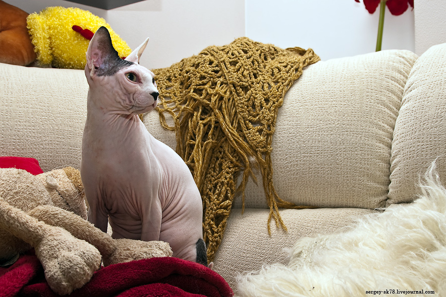 247 Лысые кошки