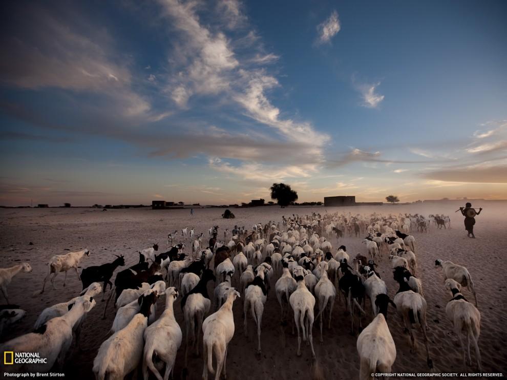 Лучшие фото National Geographic за март