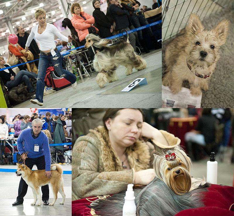 Выставка собак «Евразия 2011»: Единство разных