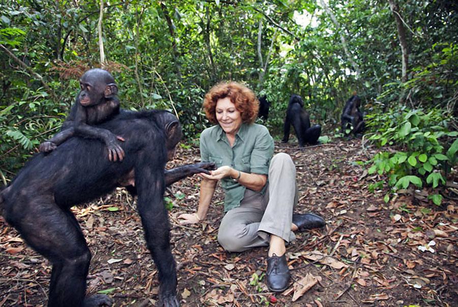 apes03 Заповедник Lola ya Bonobo в Конго
