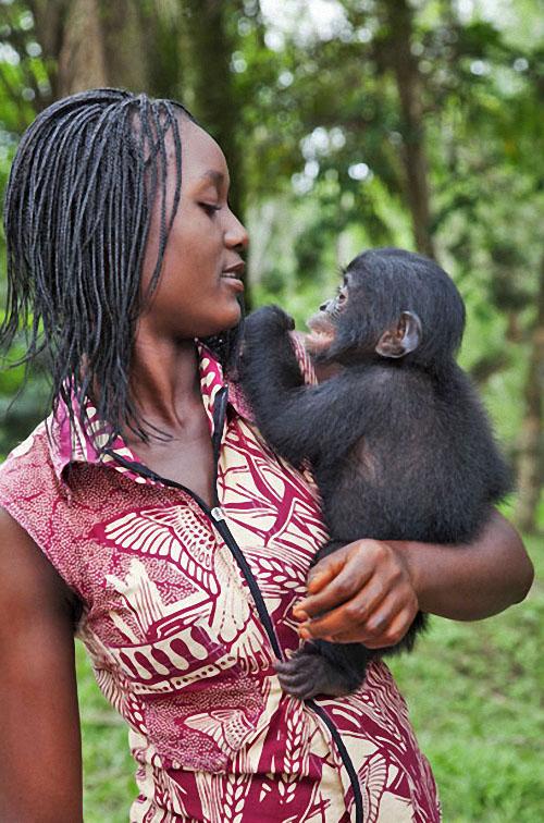 apes05 Заповедник Lola ya Bonobo в Конго