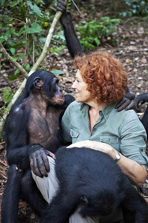 apes13 Заповедник Lola ya Bonobo в Конго