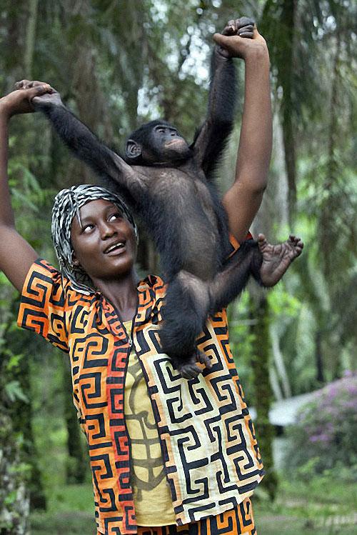 apes14 Заповедник Lola ya Bonobo в Конго