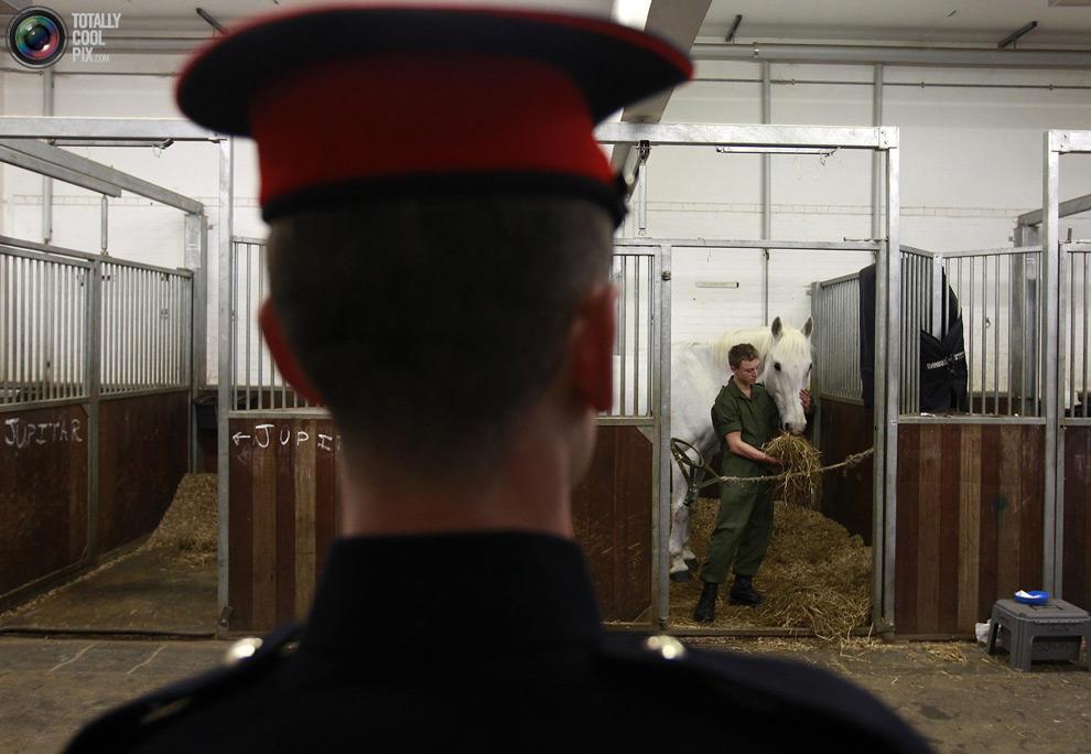 cavalryI Королевская конная гвардия