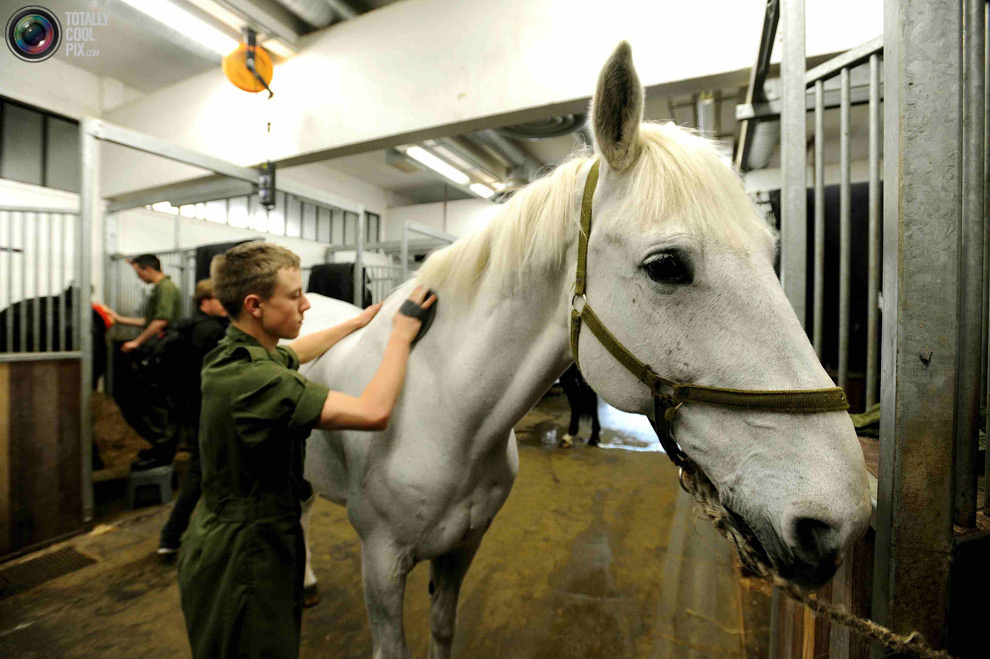 cavalryJ Королевская конная гвардия
