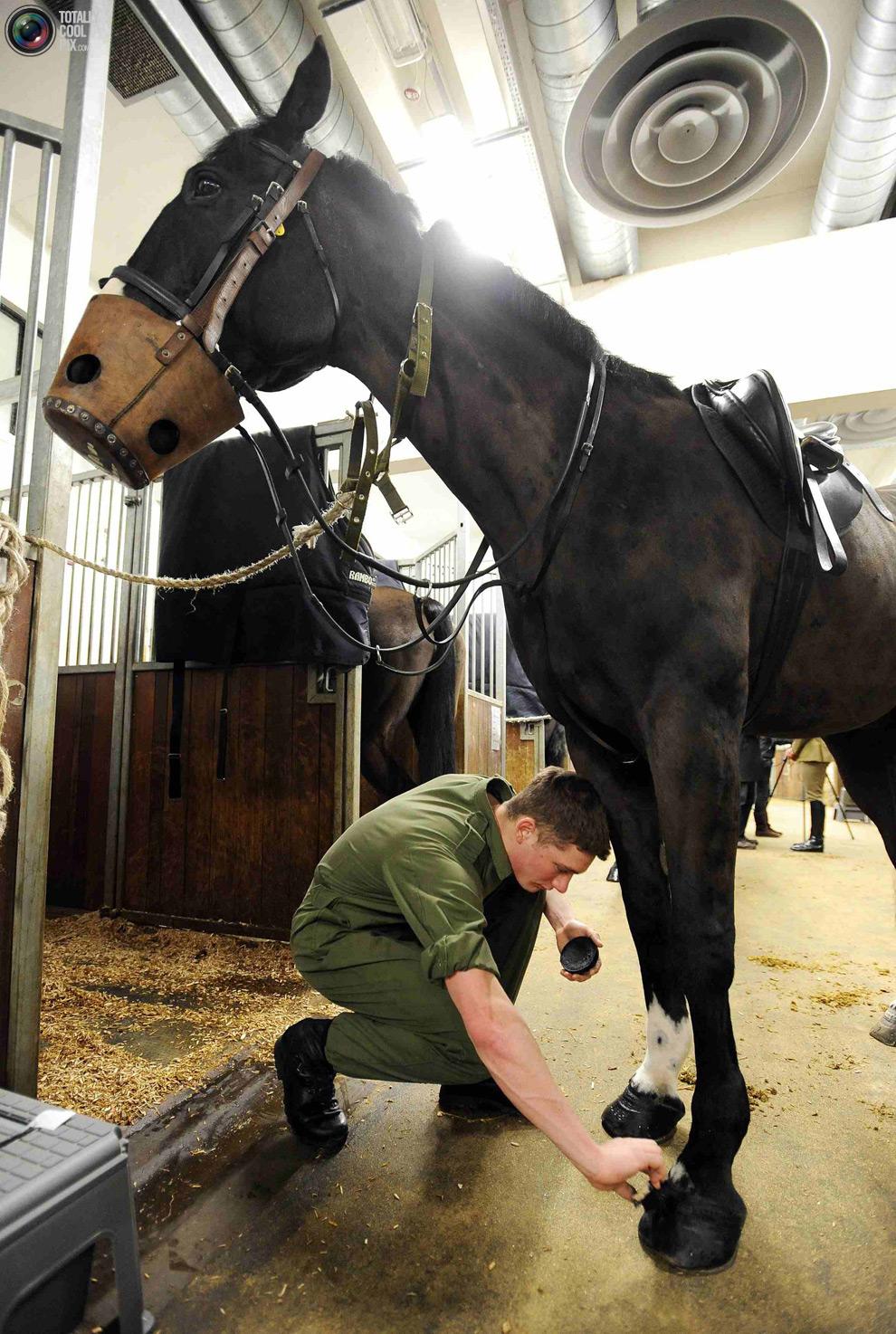 cavalryM Королевская конная гвардия