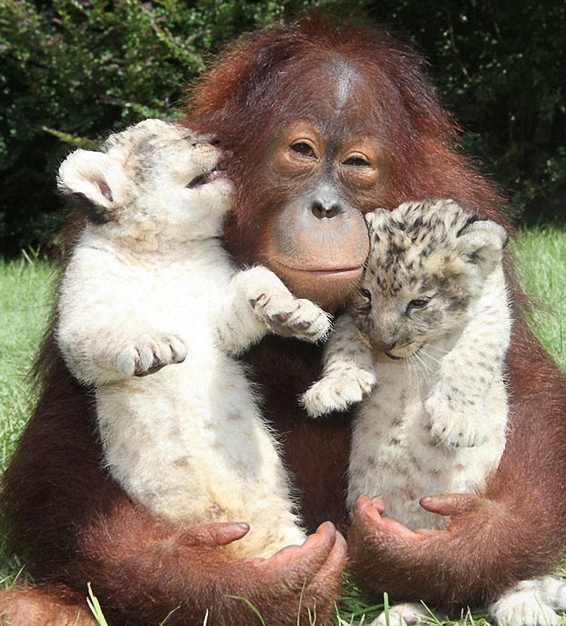 картинки о любви дружбе и с приколами