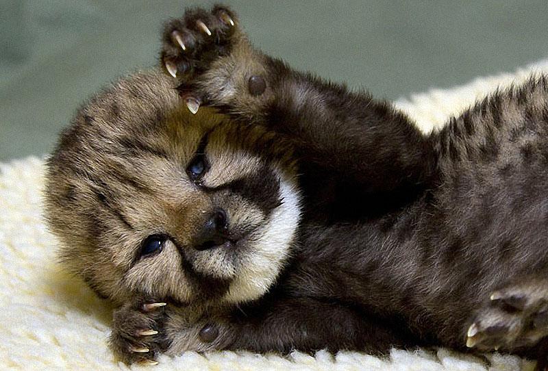 cute10 Забавное и умилительное зверье