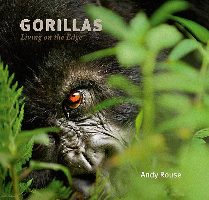 gorillas19 Гориллы: Жизнь на грани