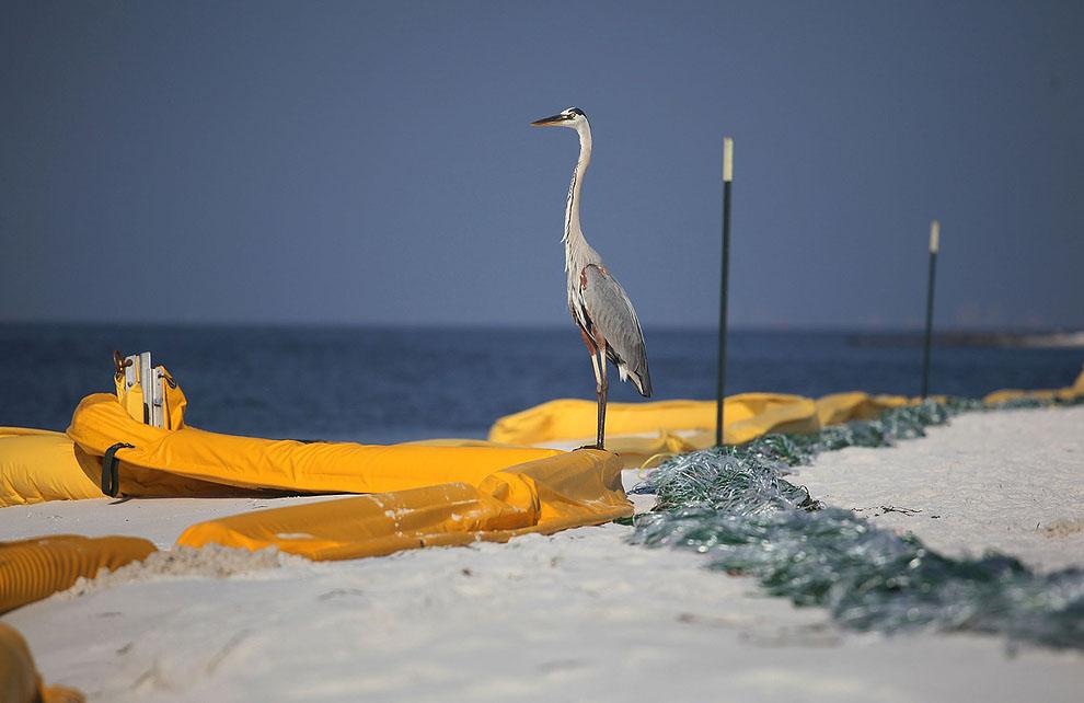 o25 01754439 Разлив нефти в Мексиканском заливе год спустя