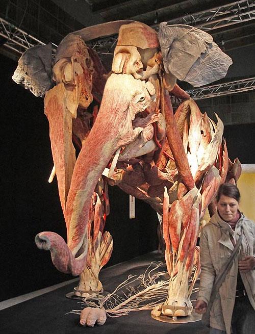 plastif01 Выставка пластифицированных животных в зоопарке Кёльна
