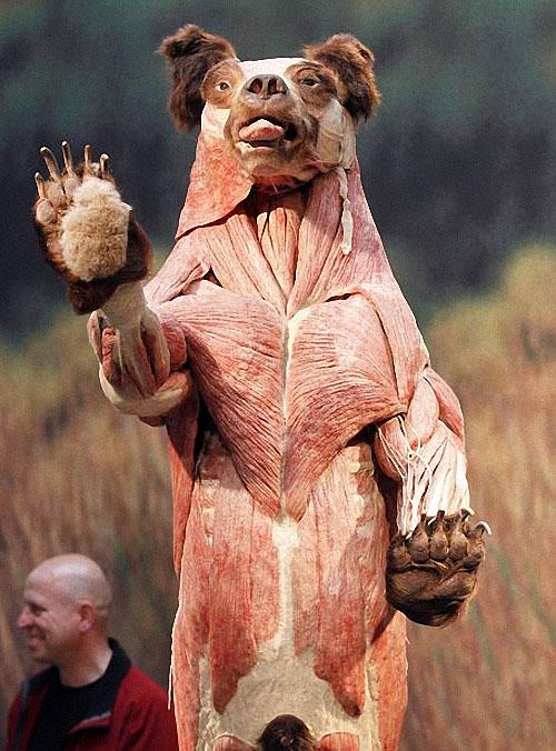plastif02 Выставка пластифицированных животных в зоопарке Кёльна