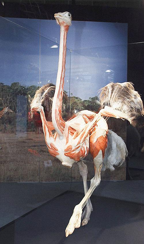 plastif05 Выставка пластифицированных животных в зоопарке Кёльна