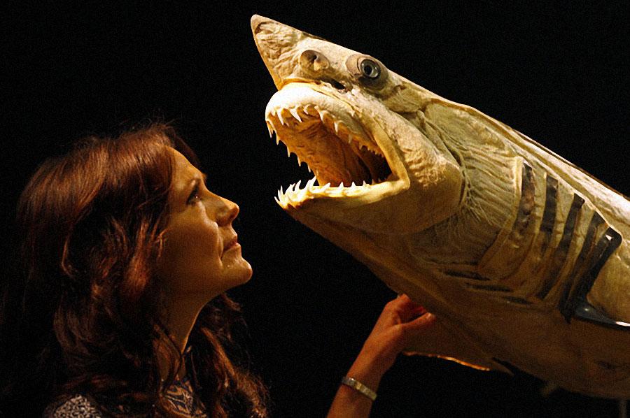 plastif12 Выставка пластифицированных животных в зоопарке Кёльна