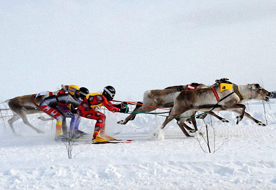 race01 Гонки на северных оленях в Лапландии