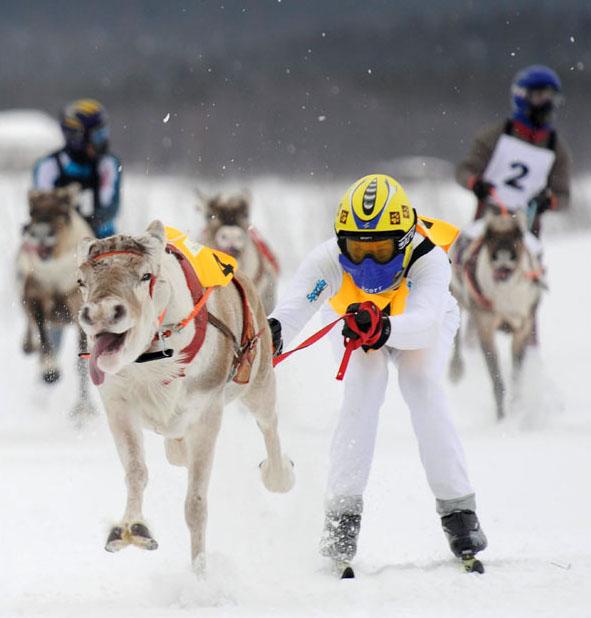 race02 Гонки на северных оленях в Лапландии