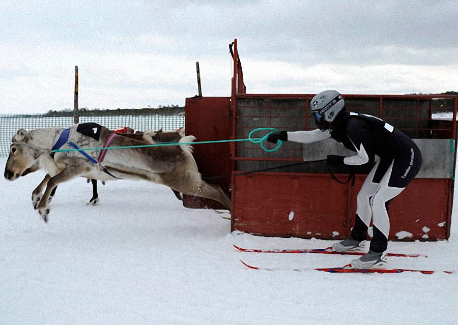 race03 Гонки на северных оленях в Лапландии