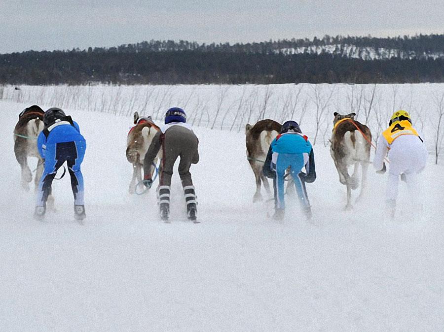 race06 Гонки на северных оленях в Лапландии
