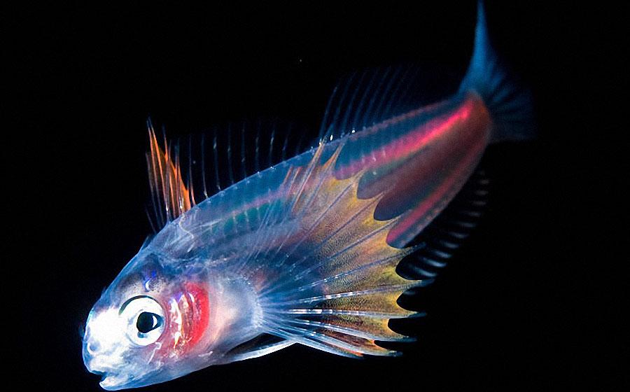 sea01 Светящиеся существа из морских глубин