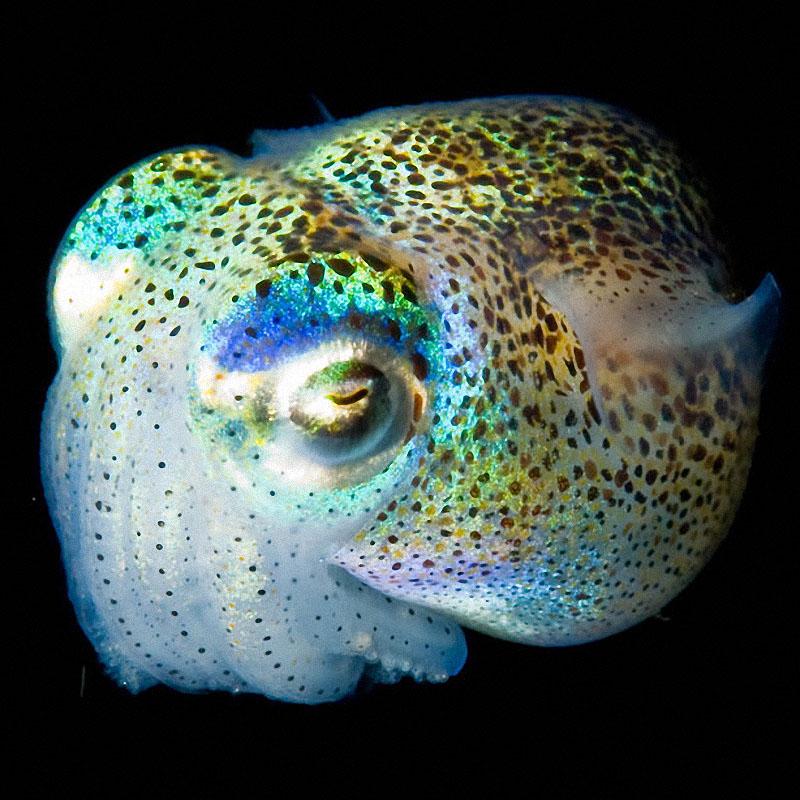 sea03 Светящиеся существа из морских глубин
