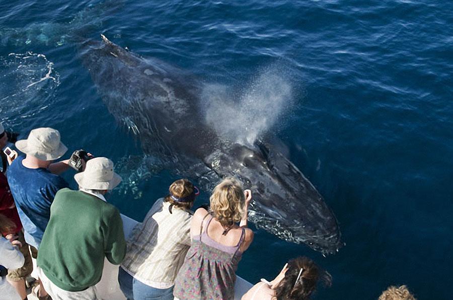 whale02 Самые дружелюбные киты на свете