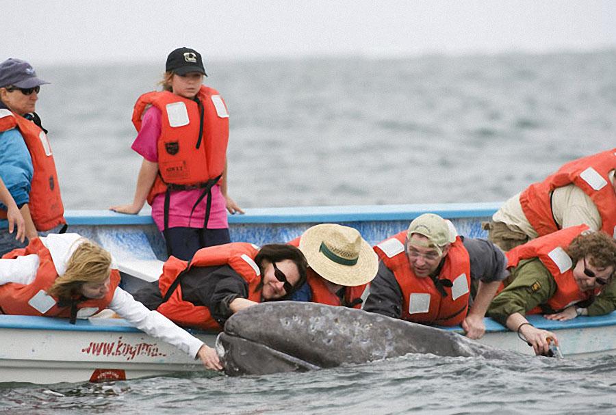 whale03 Самые дружелюбные киты на свете