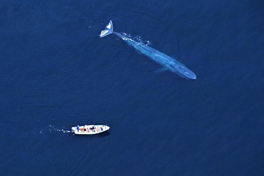 whale07 Самые дружелюбные киты на свете