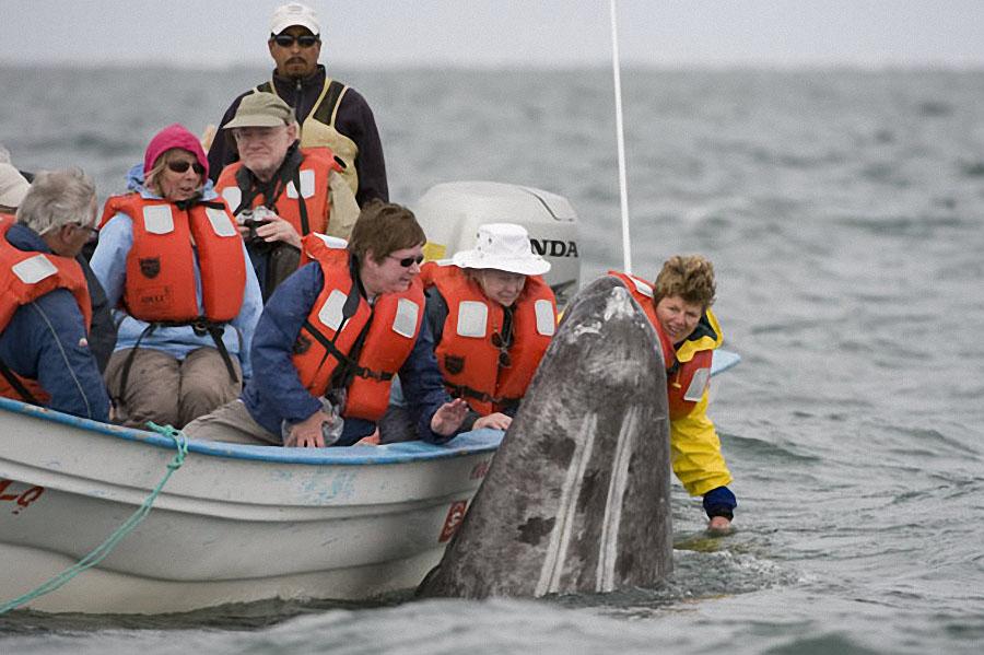 whale09 Самые дружелюбные киты на свете