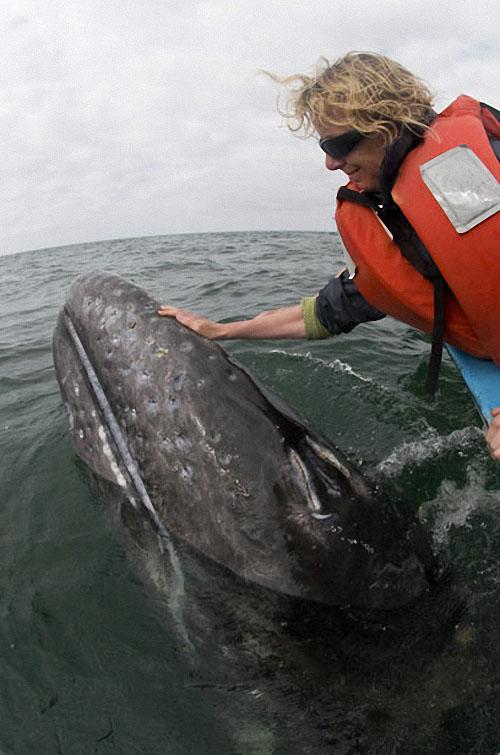 whale11 Самые дружелюбные киты на свете