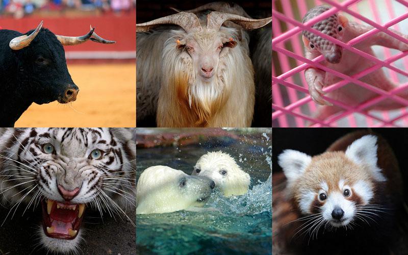 000010 Животные в новостях