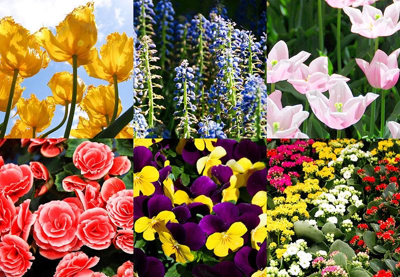 000027 Парк цветов Кёкенхоф