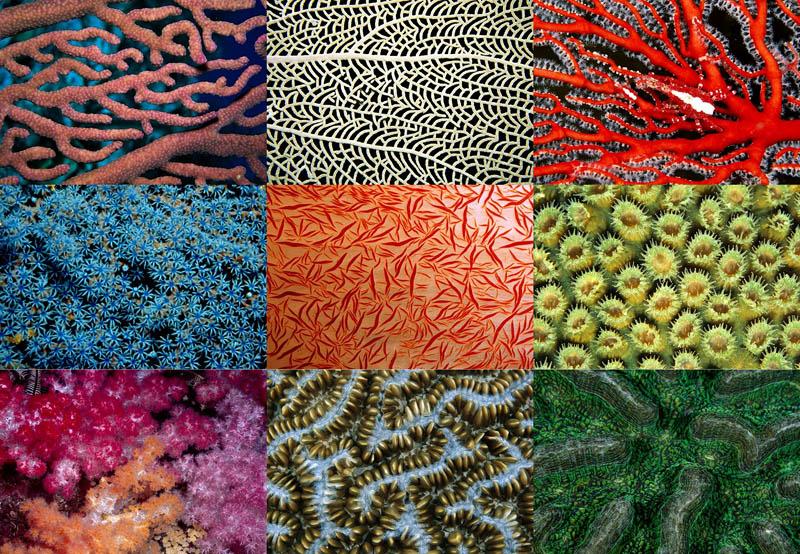 000040 Узоры природы: Кораллы