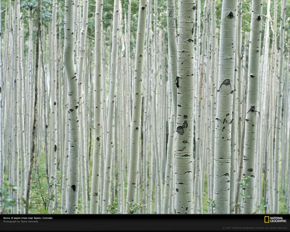 1089 990x792 Узоры в природе: деревья