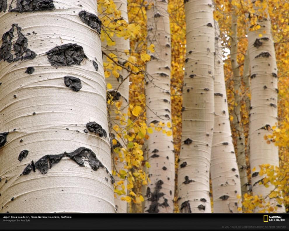 1296 990x792 Узоры в природе: деревья
