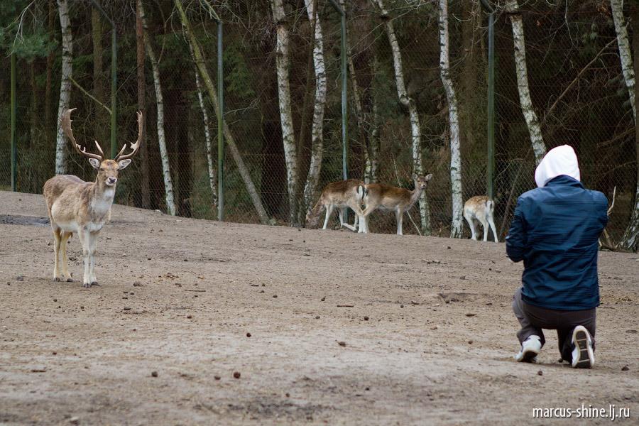Серенгети Сафари парк.
