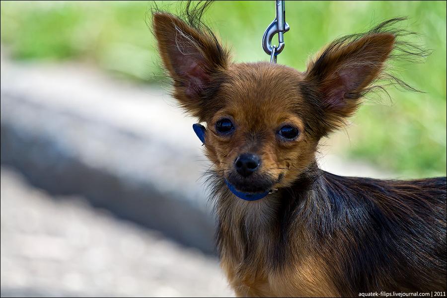 Выставка собак или дог-фрик-шоу?