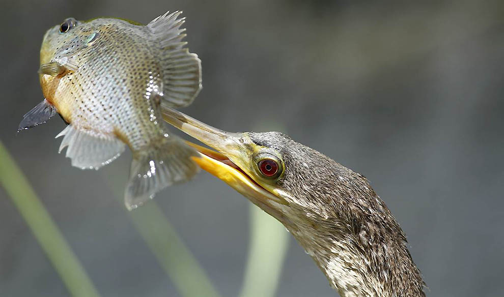 странице рыба с клювом картинки пусть эти замечательные